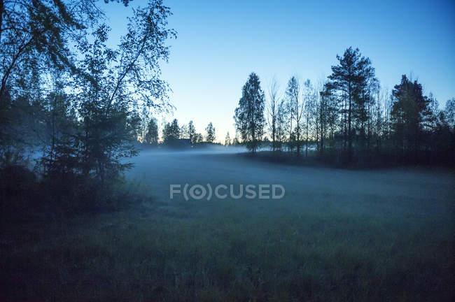 Vista panoramica del campo di nebbia all'alba a Dalarna, Svezia — Foto stock
