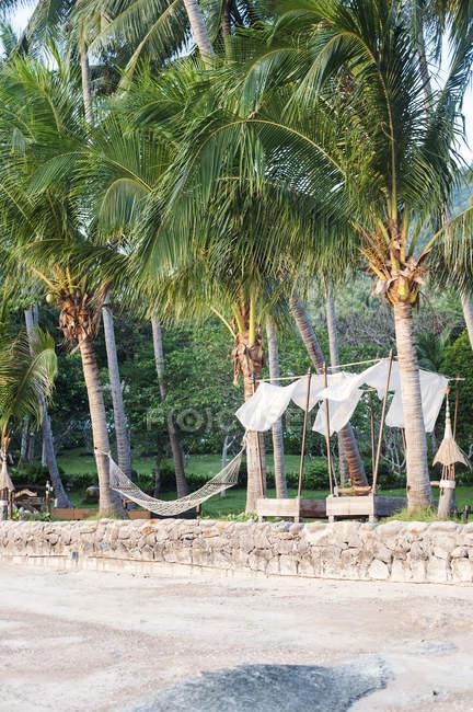 Amaca tra palme vicino alla spiaggia di Koh Tao, Thailandia — Foto stock