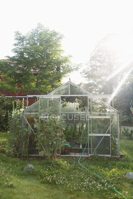 Greenhouse on lawn against trees, selective focus — Foto stock
