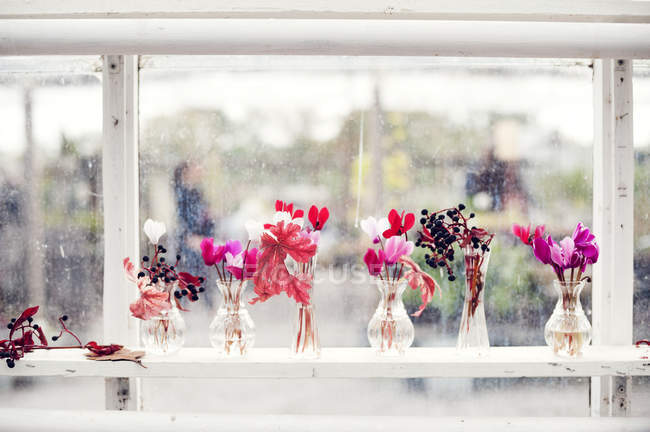 Flowers on shelf in green house, selective focus — Stock Photo