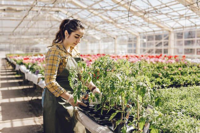 Impianti di controllo dei giardinieri, attenzione selettiva — Foto stock