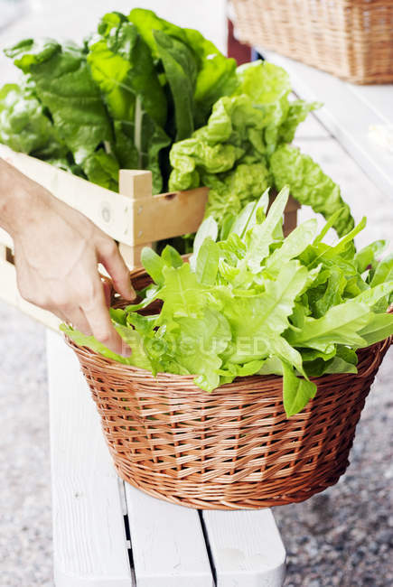 Hand reaching for basket of lettuce, focus on foreground — Stock Photo