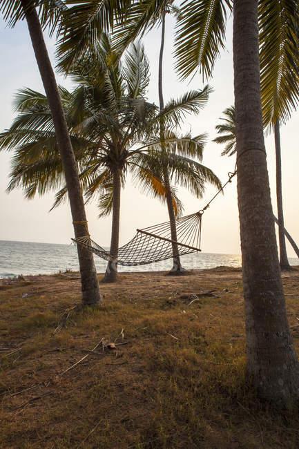 Hammock entre palmeiras em Varkala, India — Fotografia de Stock