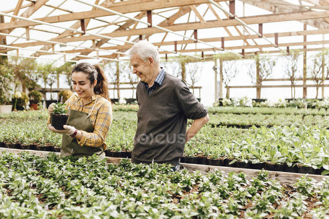 Garden centre workers talking at greenhouse, selective focus — Stock Photo