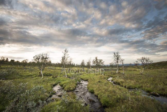 Живописный вид на ручьи в национальном парке Паллада-Юластонтури, Финляндия — стоковое фото