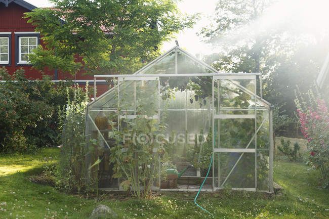 Greenhouse on lawn, lens flare, focus on foreground — Stock Photo