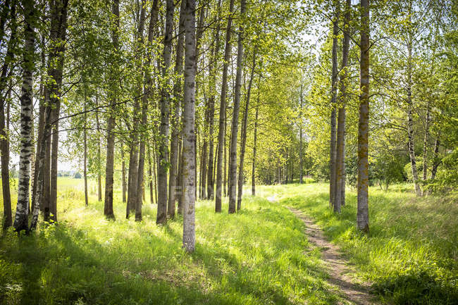 Живописный вид на лесной тропе в Вантаа, Финляндия — стоковое фото
