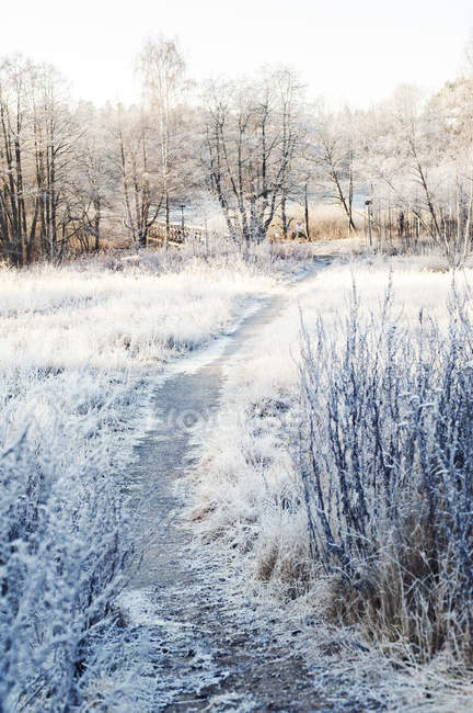 Scenic view of path through field at winter in Sodermanland, Sweden — Stock Photo