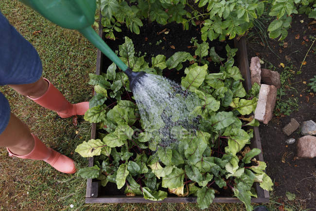 Woman watering garden, selective focus — Stock Photo