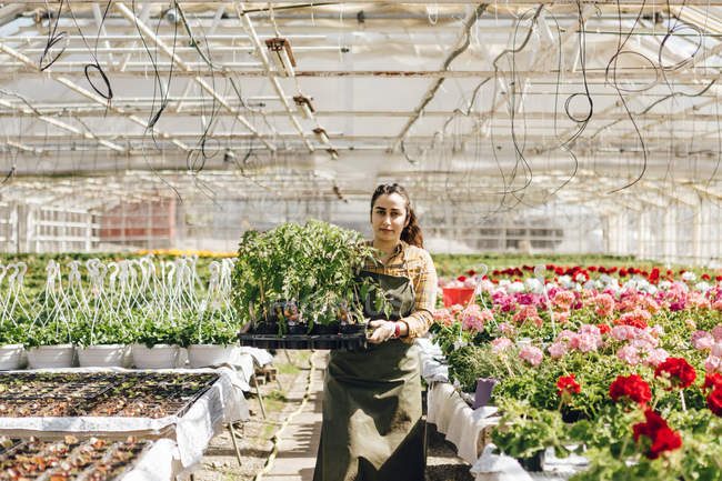Garden centre worker holding plants, selective focus — Stock Photo