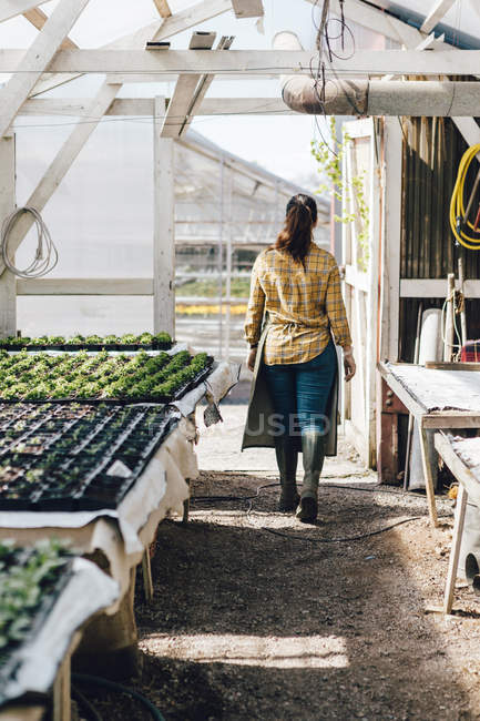 Rear view of garden centre worker in greenhouse — Stock Photo