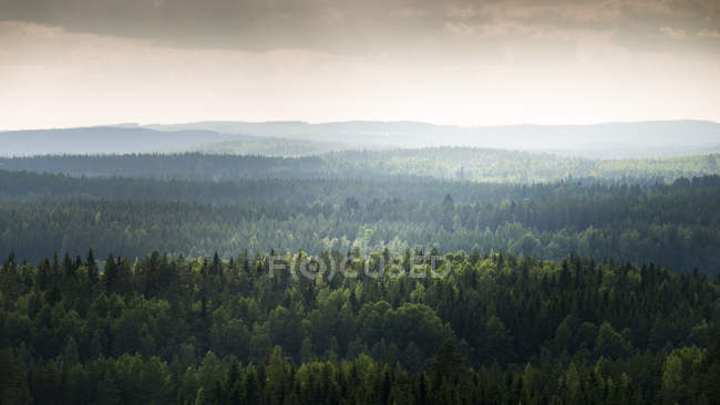 Scenic view of forest in Laukaa, Finland — Stock Photo