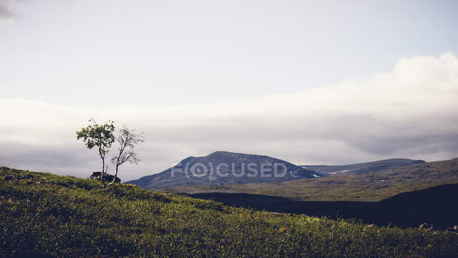 Scenic view of tree at field under overcast sky in Enontekio, Finland — Stock Photo