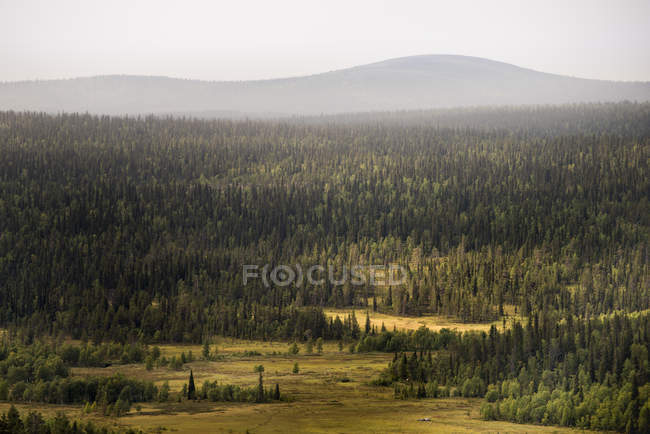 Scenic view of forest landscape in Lapland, Sweden — Stock Photo