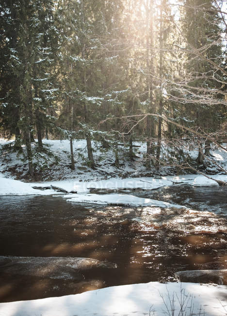 Forest river during winter in Vantaa, Finland — Stock Photo