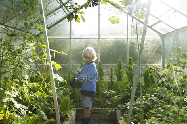 Boy watering plants in greenhouse, selective focus — Stock Photo