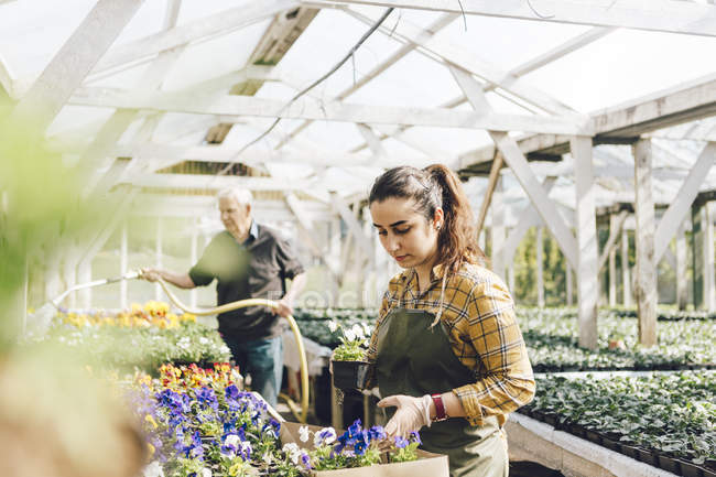Two garden centre workers checking and watering plants, selective focus — Stock Photo