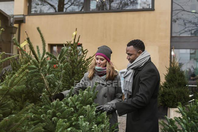Супружеская пара делает покупки на рождественской ярмарке, выбирая елку — стоковое фото