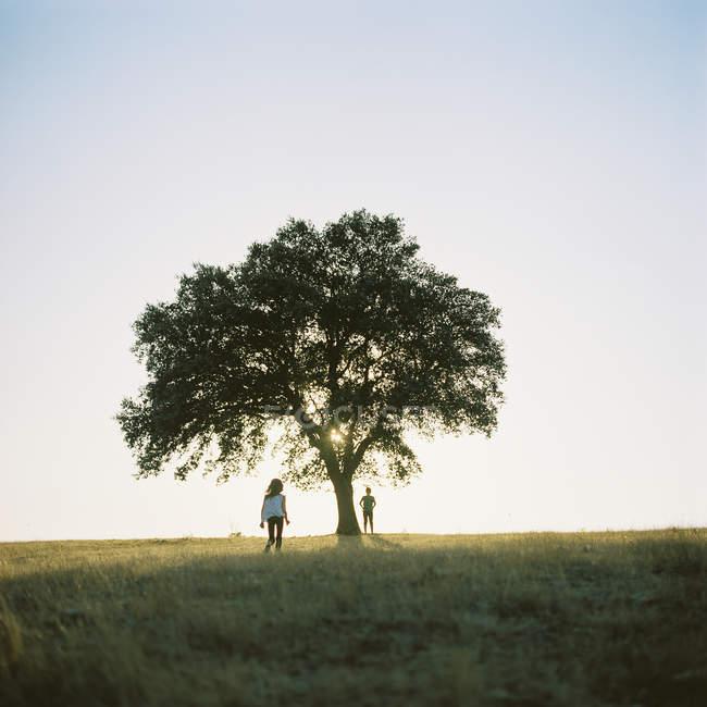 Deux enfants par arbre dans les champs au Portugal — Photo de stock