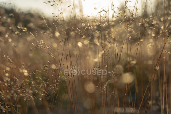 Scenic view of field, selective focus — Stock Photo