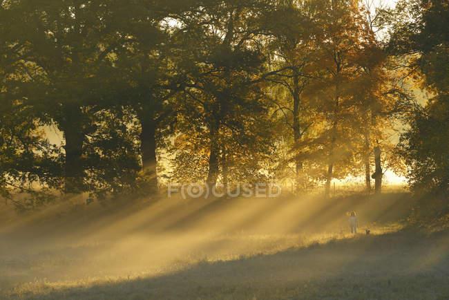 Солнце светит сквозь осенние деревья — стоковое фото
