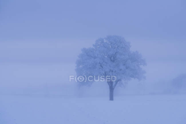 Snow covered tree during winter — Stock Photo