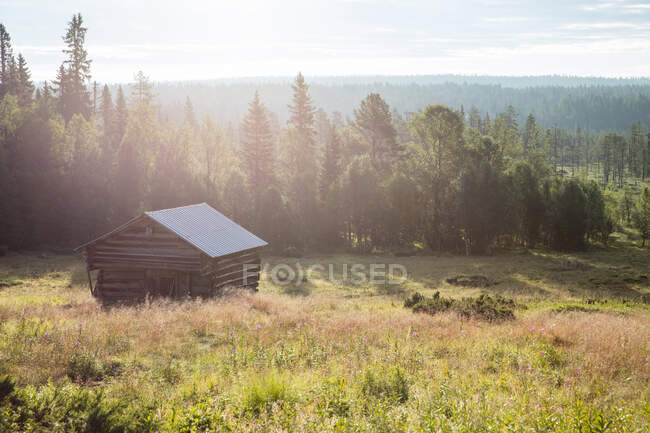 Wooden barn on green field near forest at sunny day — Stock Photo