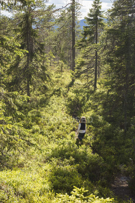 Girl walking in green forest, high angle view — Stock Photo