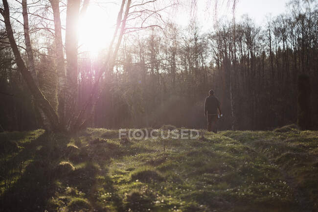 Man hiking in forest in the morning, back view — Stock Photo