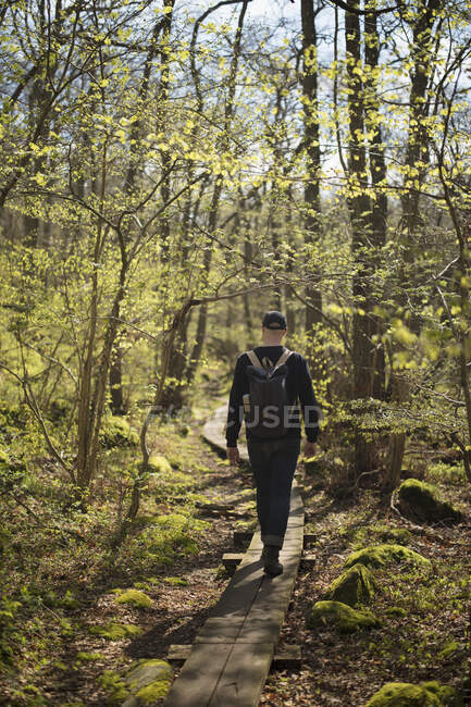 Man hiking in green forest, back view — Stock Photo