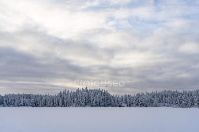 Snow and forest under overcast sky in Kilsbergen, Sweden — Stock Photo