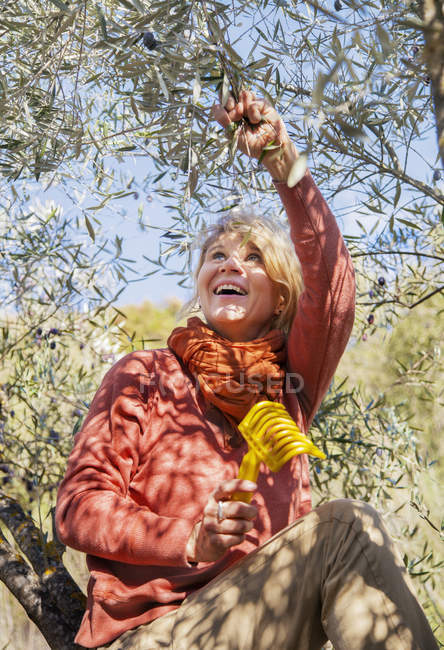 Woman picking olives from tree, selective focus — Stock Photo
