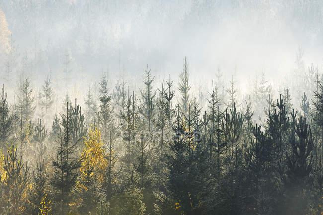 Vista panorámica de la luz del sol sobre el bosque — Stock Photo