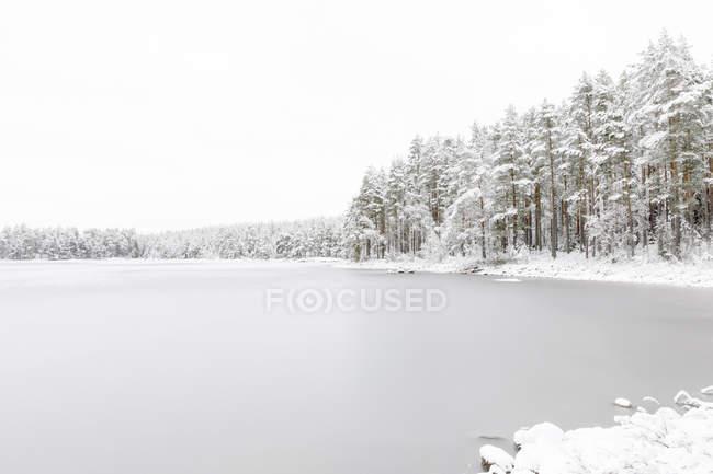 Forêt au bord du lac gelé Stora Skiren à Finspang, Suède — Photo de stock