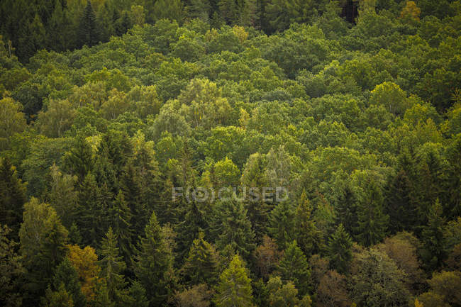 Forest of pine trees, selective focus — Stock Photo