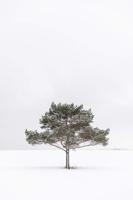 Дерево в заснеженном поле, селективное фокусирование — стоковое фото