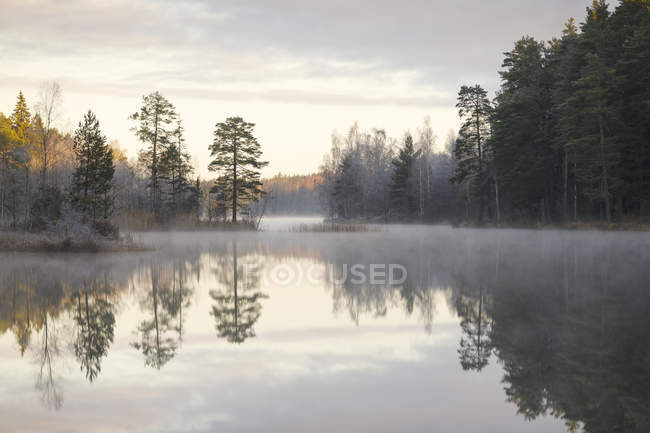 Floresta por lago em Lotorp, Suécia — Fotografia de Stock