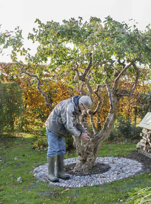 Anziani che tendono ad albero nel cortile — Foto stock