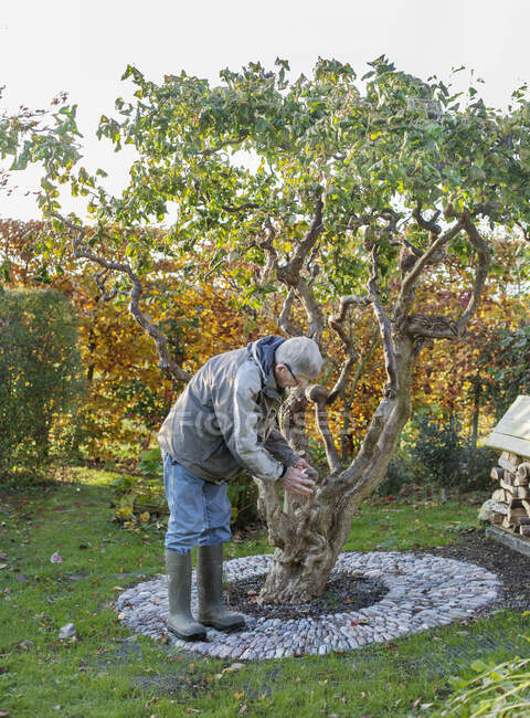 Senior man tending to tree in back yard — Stock Photo