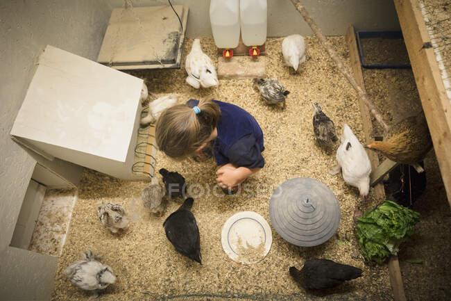 Cute little girl in chicken coop, overhead view — Stock Photo
