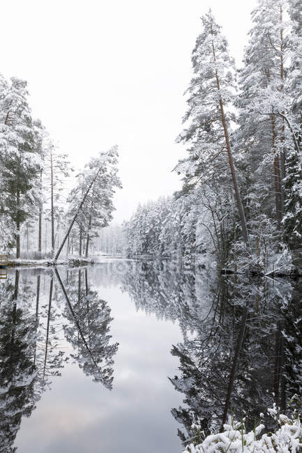 Forest lake with trees covered by snow in Lotorp, Sweden — Foto stock