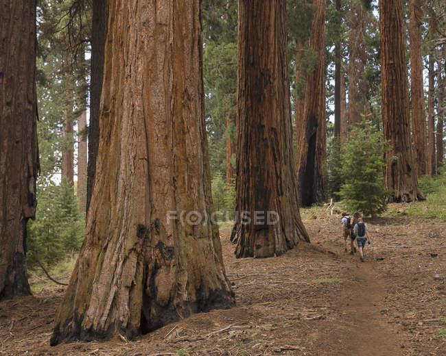 Caminhantes na floresta, foco seletivo — Fotografia de Stock