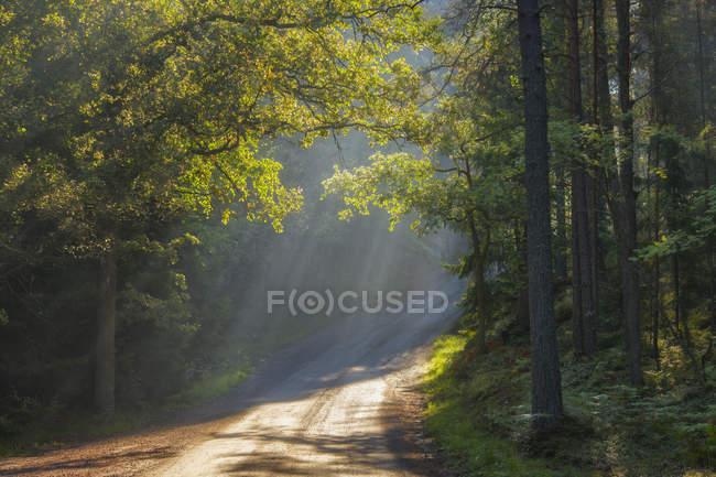 Солнечные лучи над лесной дорогой в Лидинго, Швеция — стоковое фото