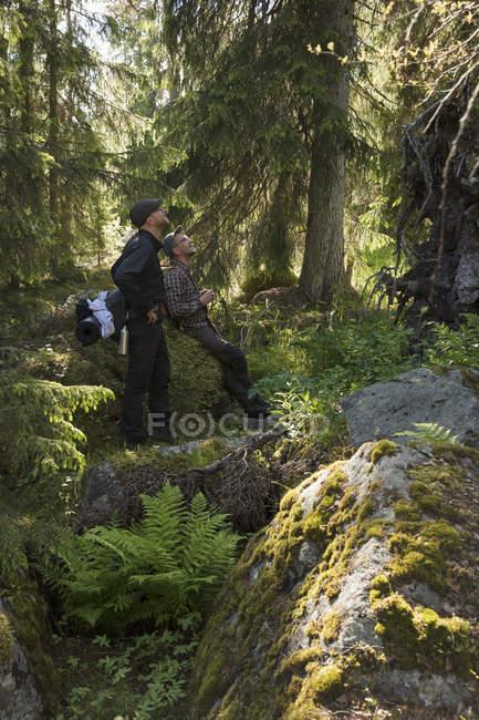 Мужчина прогуливался в заповеднике Тойингдон в Швеции — стоковое фото