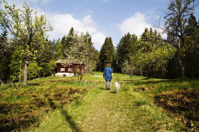 Mujer de gran tamaño caminando con perro en camino en el campo, vista hacia atrás - foto de stock