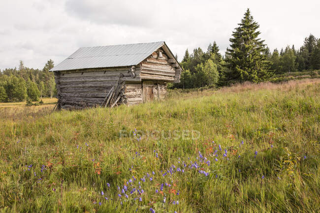 Wooden barn in field, beautiful summer view — Stock Photo