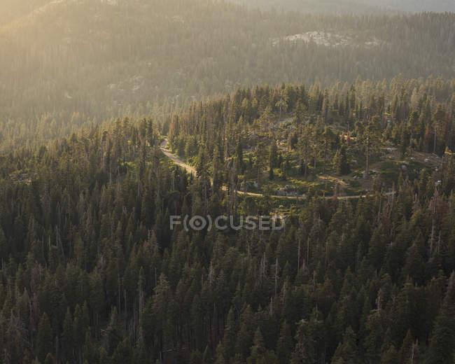 Вид на ліс у національному парку Секвоя (Каліфорнія). — стокове фото