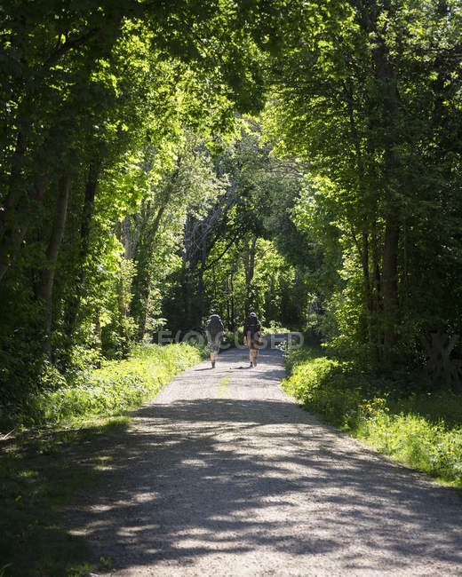 Hommes marchant sur une route forestière, vue de l'arrière- — Photo de stock
