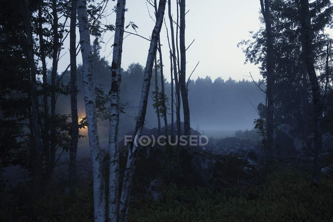 Trees by misty field at night — Stock Photo