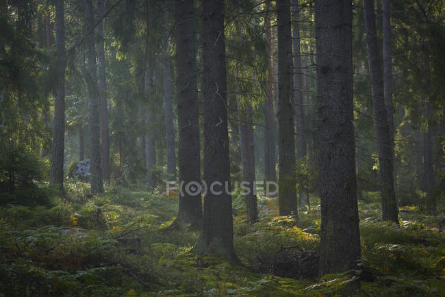 Beautiful tall green trees and vegetation in scenic forest — Stock Photo